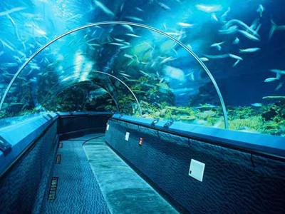 图片欣赏 海洋水族馆 观光隧道 海底世界大鲨鱼